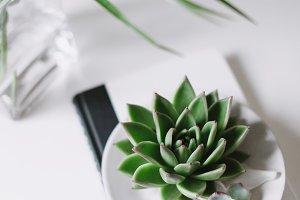 Fresh Succulent on Desk