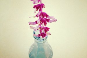 Salvia Flower in Blue Bottle