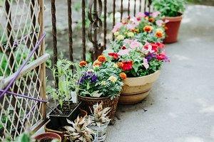 Backyard patio potted plants