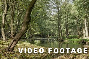 River in the forest. Autumn daytime. Smooth dolly shot