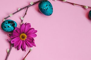 Easter quail eggs, spring flowers and willow on pink background