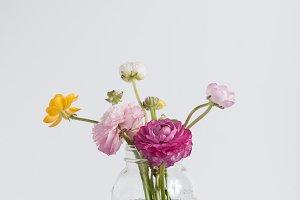 Beautiful Spring Ranunculus