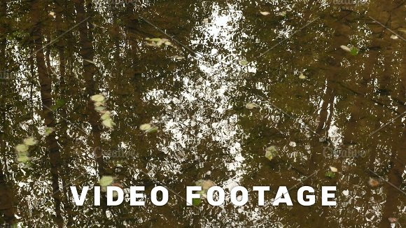Close Up To The River Water Autumn Daytime Smooth Dolly Shot