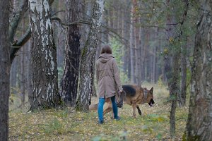 Pet - German shepherd dog in the autumn forest - rear view