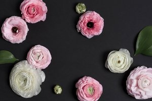 Floral Banner with Black Background