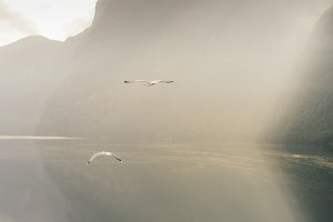 Seagulls over a fjord, Norway