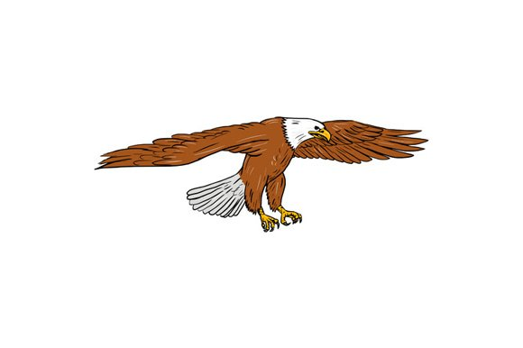 Bald Eagle Swooping Drawing