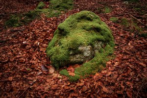 Moss in autumn forest