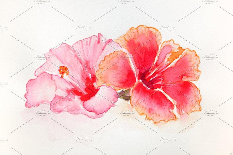 Hibiscus Flowers Watercolor Illustrations Creative Market
