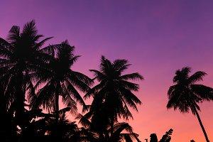 Silhouette coconut tree