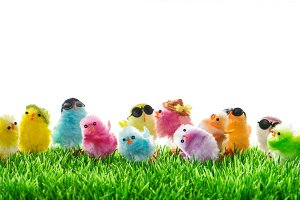Easter chickens travel holidays