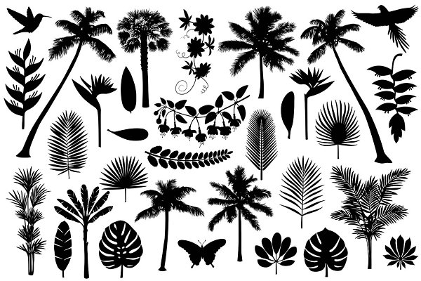 Tropical Silhouette Collection