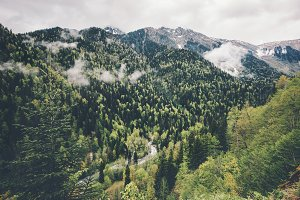 Forest Mountains and clouds