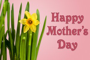 Happy Mothers Day background with daffodils