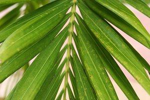 Palm Horizontal