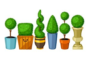 Boxwood topiary garden plants. Set of decorative trees in flowerpots