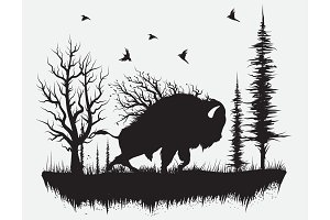 Buffalo walking in the forest