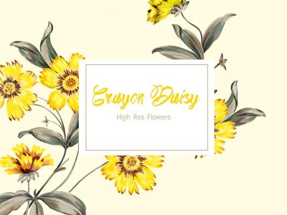 Crayon Daisy