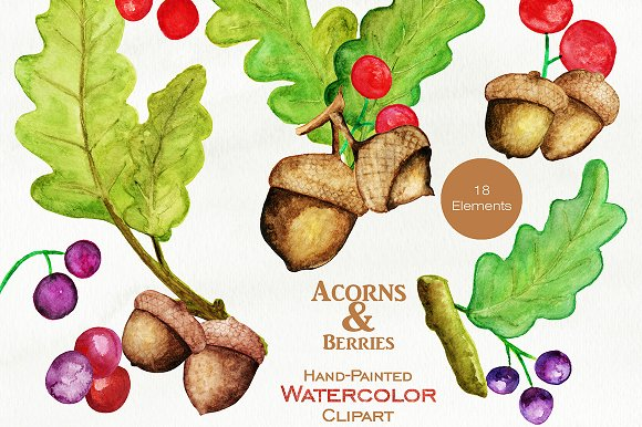 Autumn Watercolor Acorn Graphics