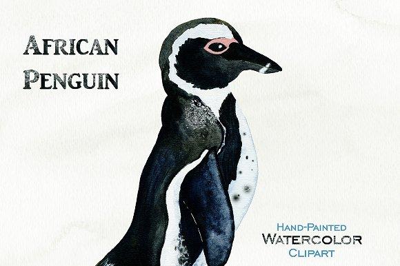 Cute Watercolor Penguin Illustration