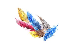 Watercolor feather composition