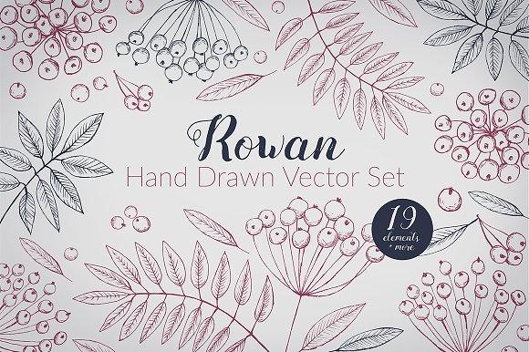 Hand Drawn Rowan Vector Set