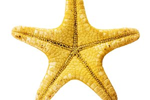 Yellow starfish isolated