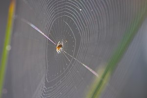 gravity defying spider web metaphors