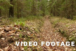 Walkway in the Forest. Autumn daytime. Smooth dolly shot