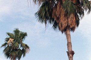 Palm tree in Barcelona