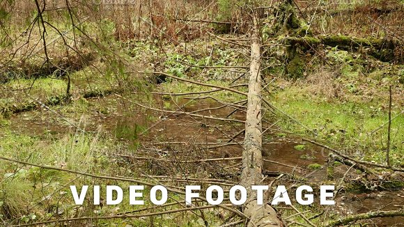 The Fallen Spruce Tree Over The River Autumn Daytime Smooth Dolly Shot