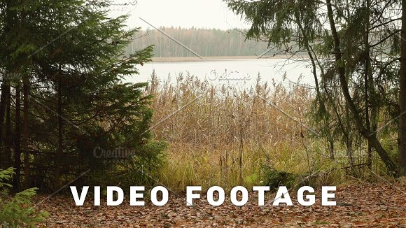 Lake In The Forest Autumn Daytime Smooth Dolly Shot