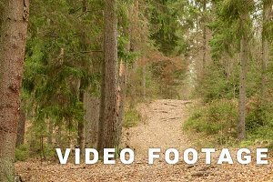Trail in the Forest. Autumn daytime. Smooth dolly shot