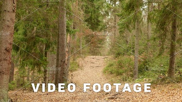 Trail In The Forest Autumn Daytime Smooth Dolly Shot