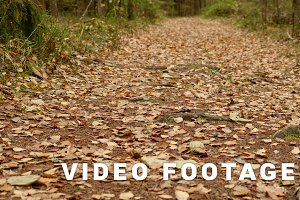 On the Ground of the Trail. Autumn daytime. Smooth dolly shot