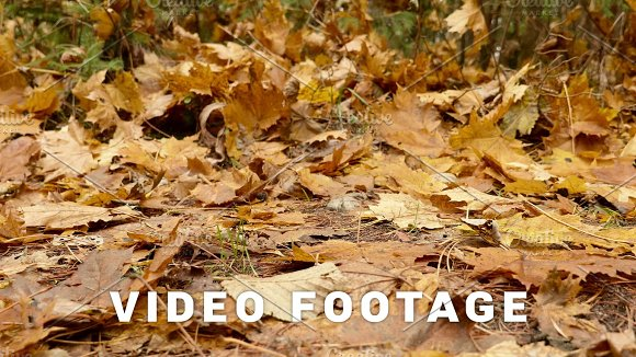 Fallen Leaves On The Ground Autumn Daytime Smooth Dolly Shot To Right