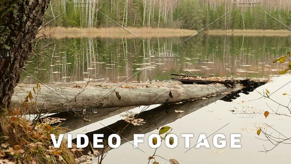 Fallen Bridge In The Lake Autumn Daytime Smooth Dolly Shot