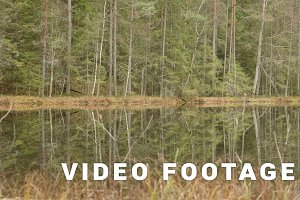 Lake in the Forest. Autumn daytime. Smooth dolly shot
