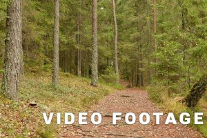 Runway in the Forest. Autumn daytime. Smooth dolly shot