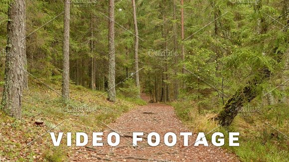 Runway In The Forest Autumn Daytime Smooth Dolly Shot