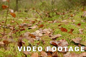 Leaves on the Moss. Autumn daytime. Smooth dolly shot