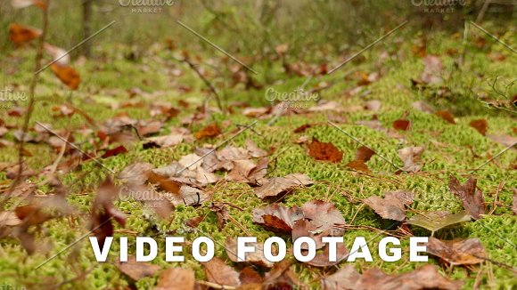 Leaves On The Moss Autumn Daytime Smooth Dolly Shot