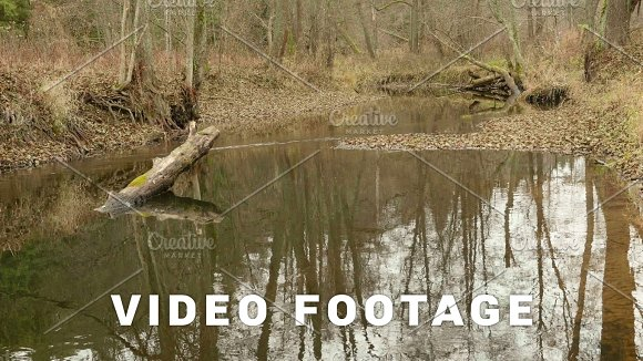 River In The Forest Autumn Daytime Smooth Dolly Shot