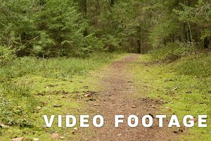 Green Forest Trail. Autumn daytime. Smooth dolly shot