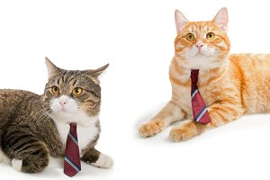 Two cats in ties