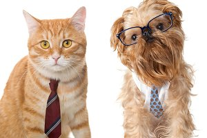 Cat in a tie and a dog