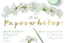 White Spring-Paperwhites