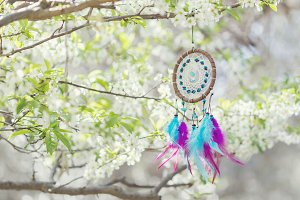 Dreamcatcher hanging on tree