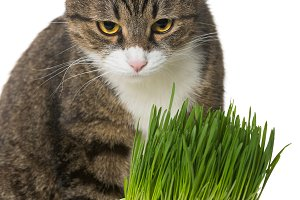 Grey cat and green grass