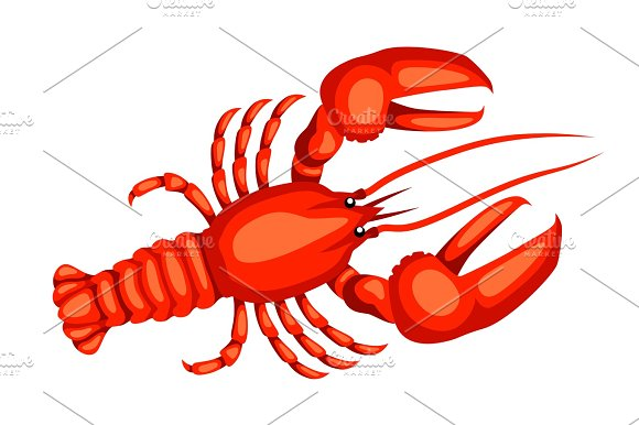 Red Lobster Isolated Illustration Of Seafood On White Background